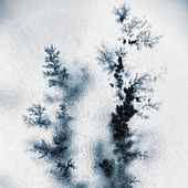 Photo Dendrite tsrystals branch