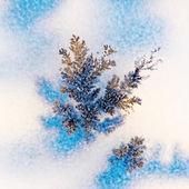 Photo Dendrite crystals macro