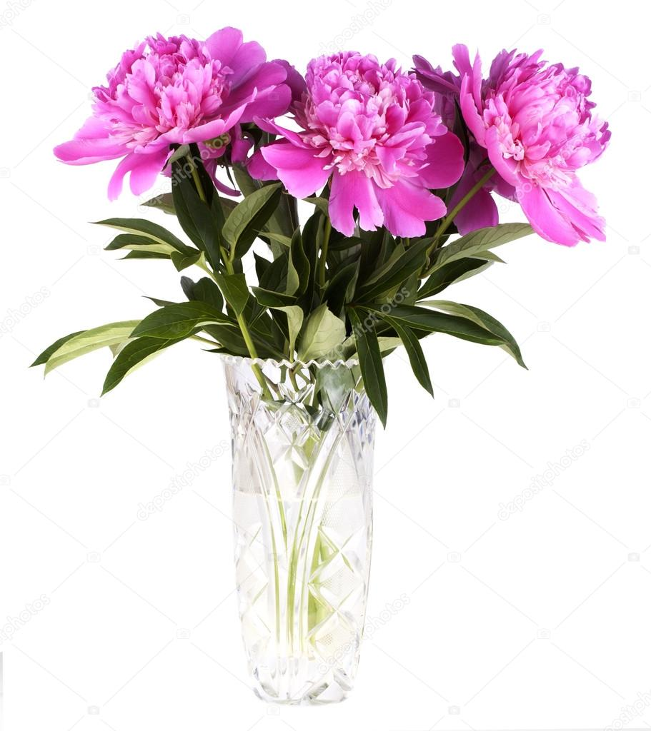 Bouquet of peonies in a crystal vase on a white background