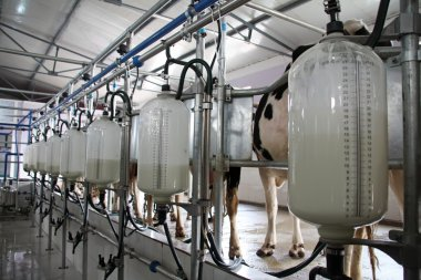 Mechanized milking equipment