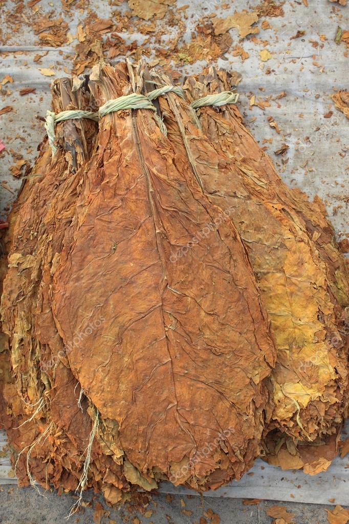tobacco leaf Being a leaf from the middle priming, our nicaraguan viso tobacco leaf is thinner than its ligero tobacco leaf counterpart, but thicker than the seco like the rest of our.