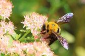 Fotografia insetto dellape sul fiore