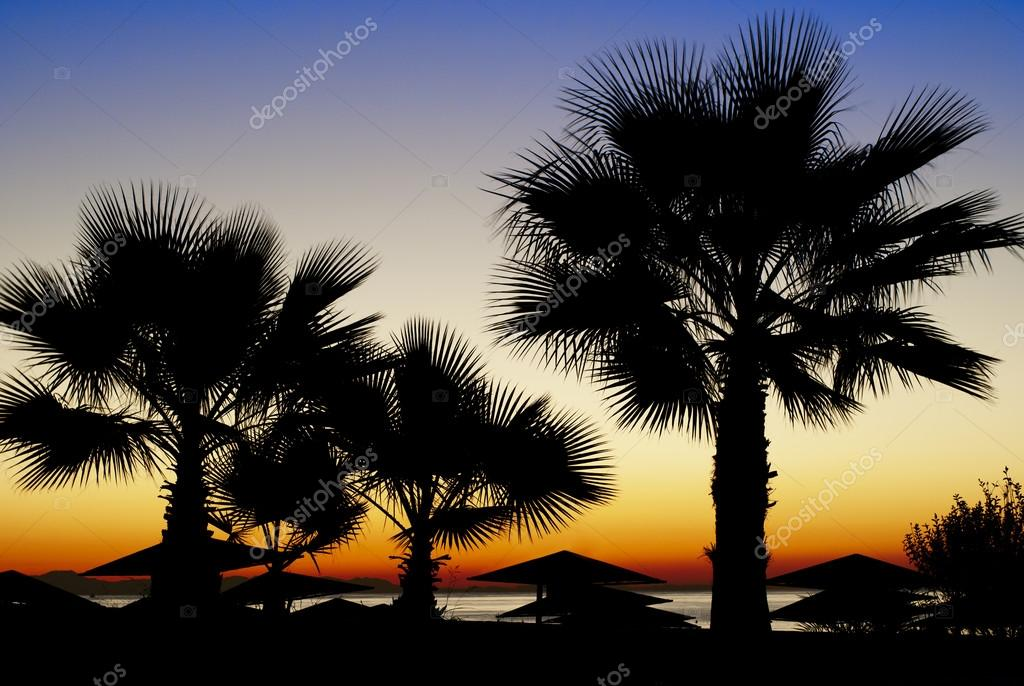 Palm Trees Silhouetted Against A Sunset Stock Photo Serggn 35042069