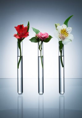 Flowers in test-tubes