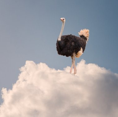 Ostrich Standing On Cloud