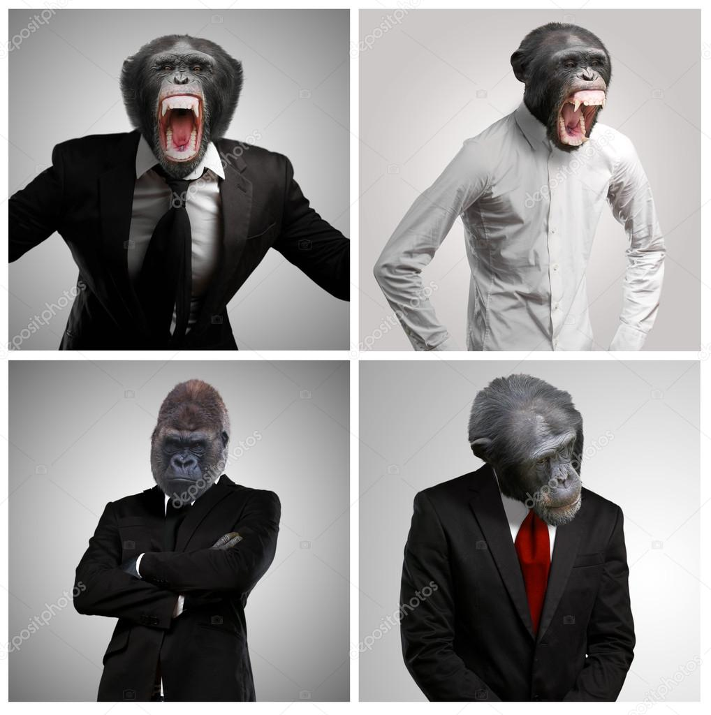 Series Of A Businessman With Monkey Head