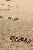 Kutya lábnyomok a homokban
