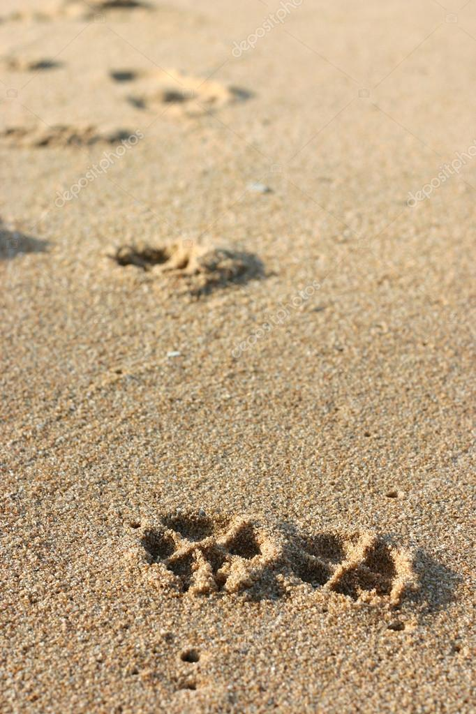 Dog Footprints on the Sand