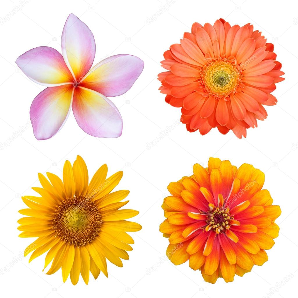 Set of colorful flowers