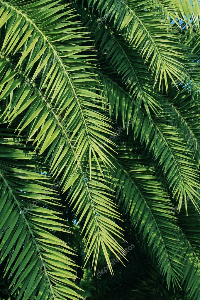 Palm trees leaves