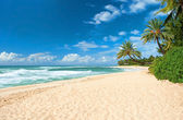 Fotografie Untouched sandy beach with palms trees and azure ocean in backgr