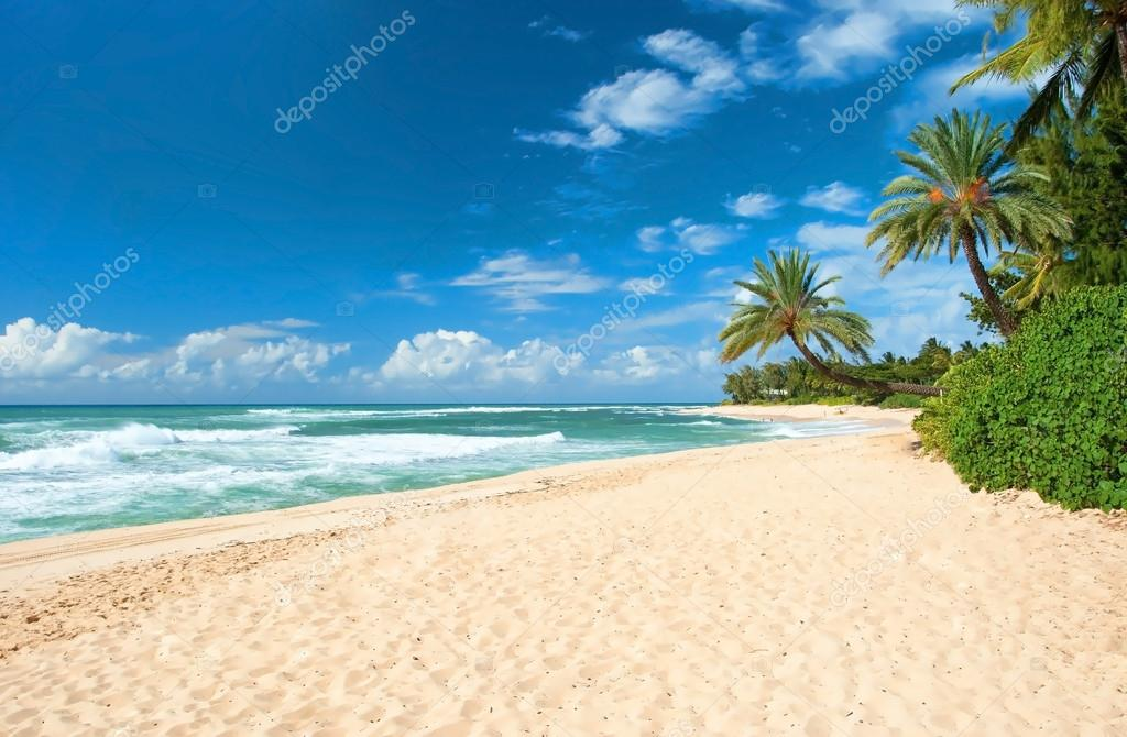 Untouched sandy beach with palms trees and azure ocean in backgr