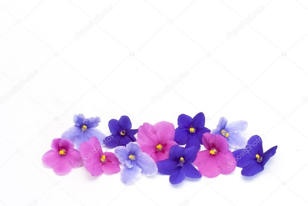 Pink purple and blue violet flowers on a white background stock pink purple and blue violet flowers on a white background stock photo mightylinksfo