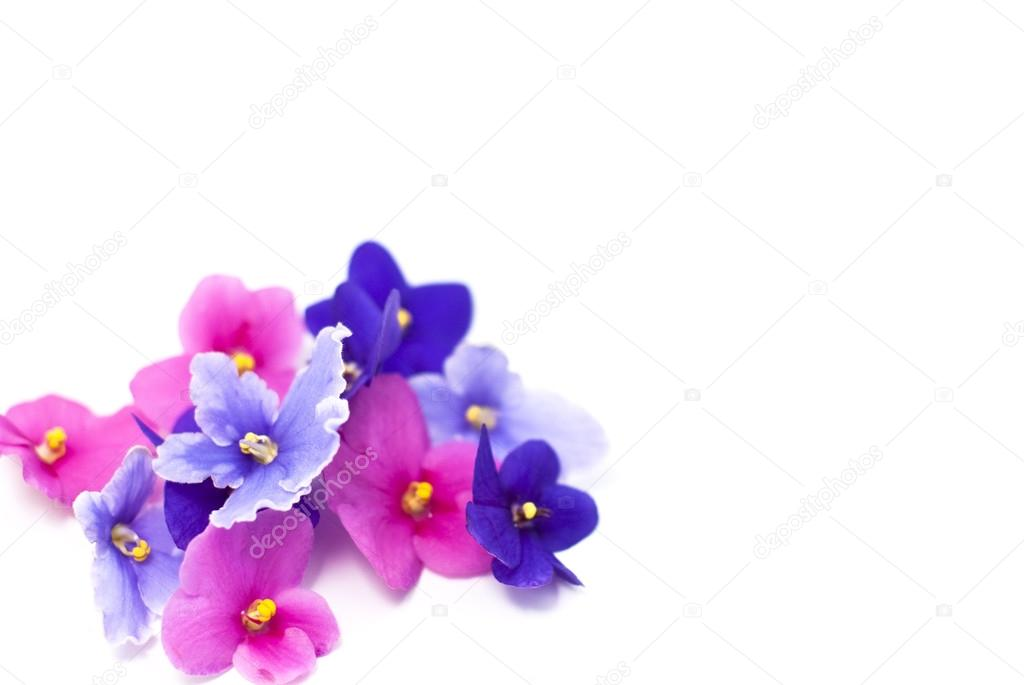 Pink Purple And Blue Violet Flowers On A White Background Stock