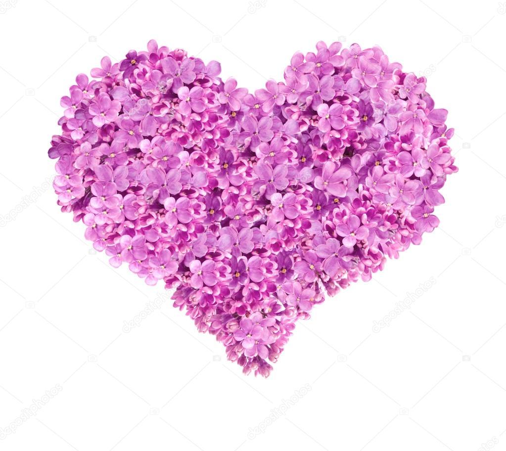valentin herz blumen lila wei er hintergrund stockfoto rakurs 39900593. Black Bedroom Furniture Sets. Home Design Ideas