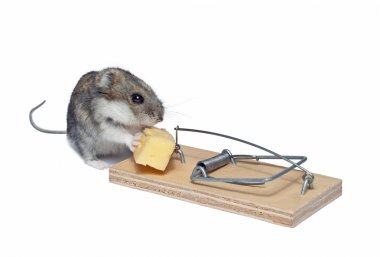 Mouse and mousetrap