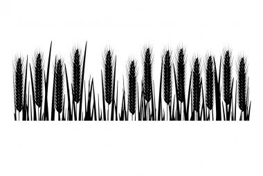 Silhouette of ripe wheat ears