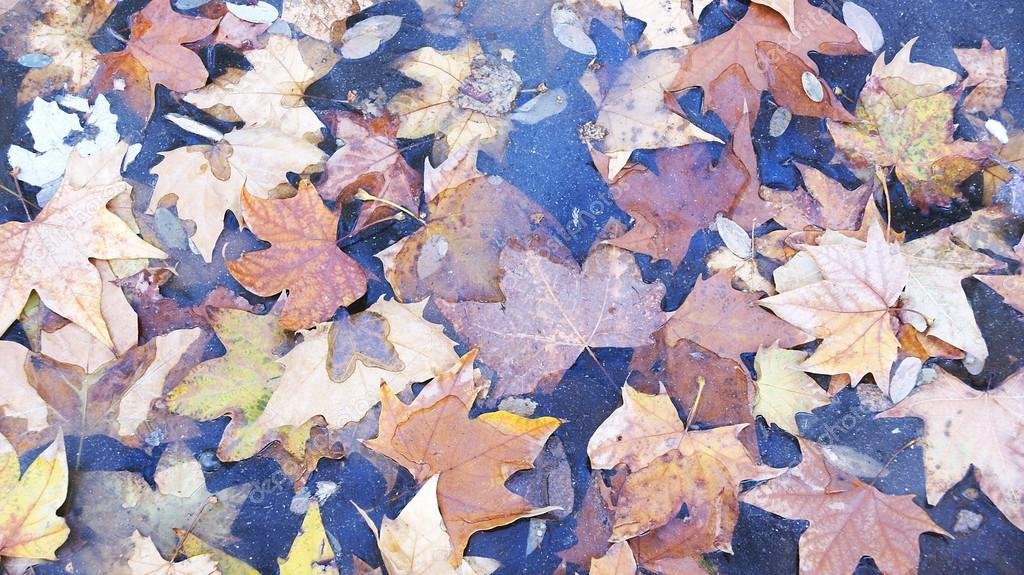 Dry leaves of autumn in Barcelona for backgrounds and textures