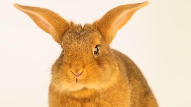 das Kaninchen die isst