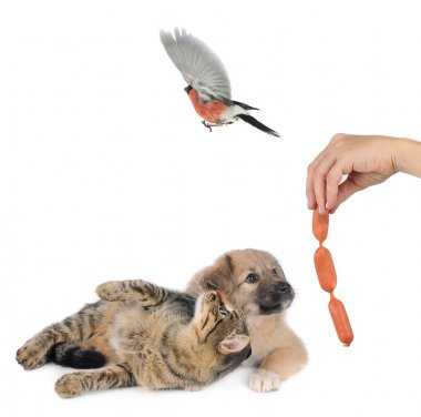 Bullfinches and Dog