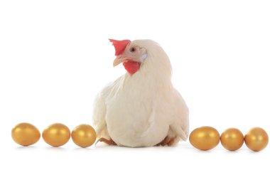 Hen sitting on golden eggs