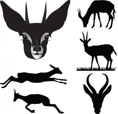Antelope collection