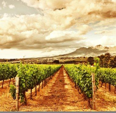 Beautiful grape valley
