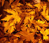 Fotografie podzimní listí pozadí