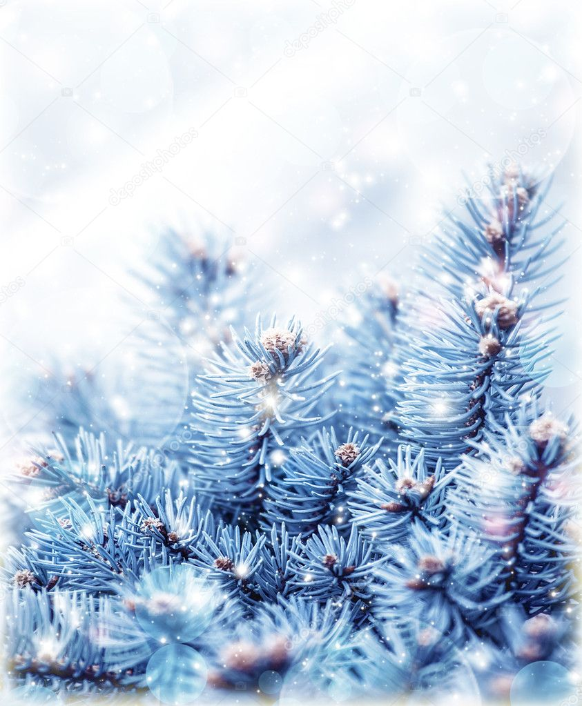 Snowy fir tree background