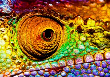 Photo of colorful reptilian eye, closeup head part of chameleon, multicolor scaly skin of lizard, african animal, beautiful exotic iguana, wild nature, fauna of rainforest stock vector