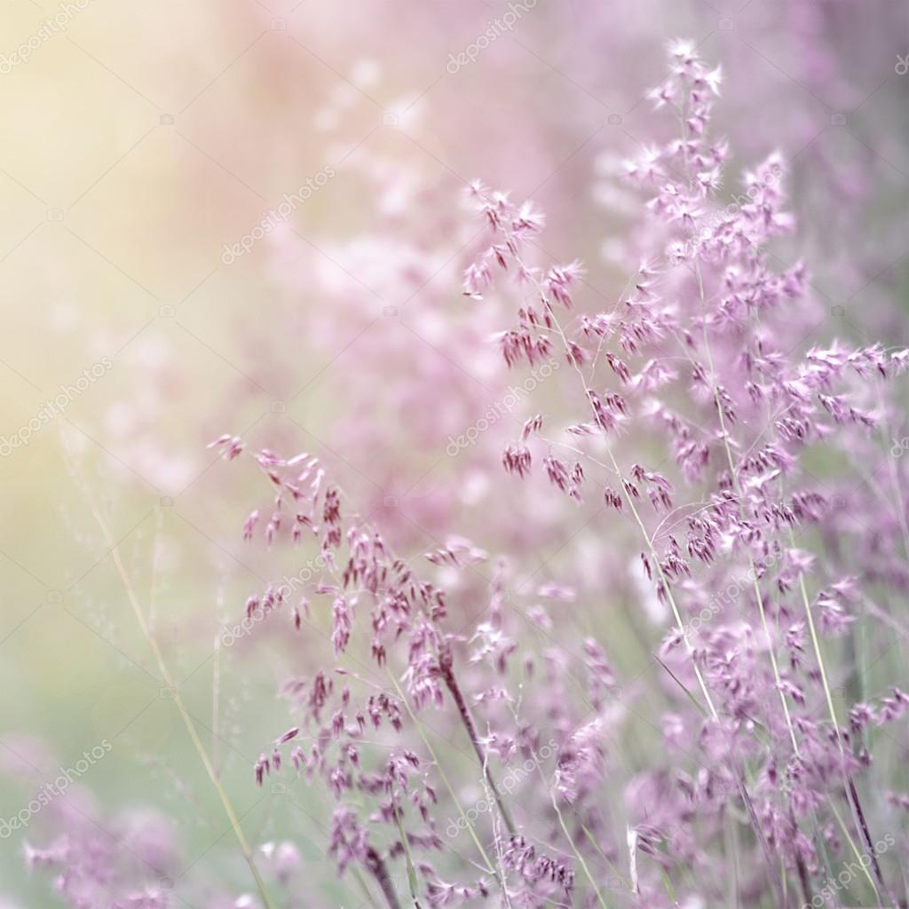 Wildflower fine art background