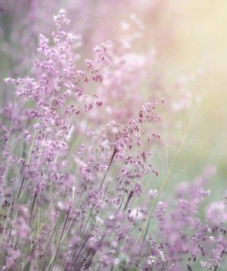 Dreamy pink flowers field