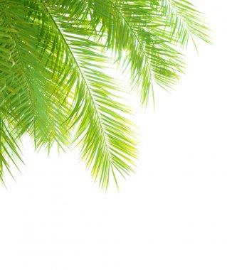 Palm tree leaves border