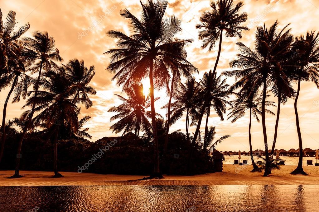 Tropical beach on sunset