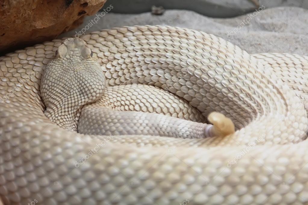 Serpiente blanca — Foto de Stock d7cf25302f9c