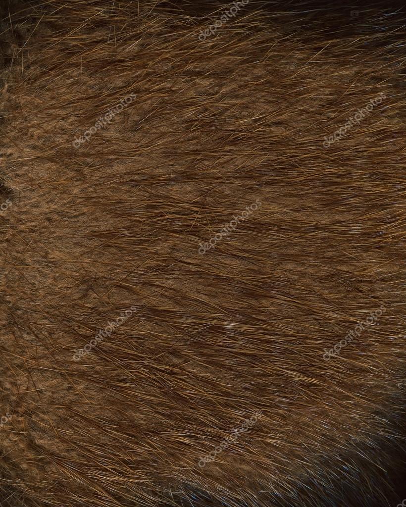 Fur texture. Beaver.