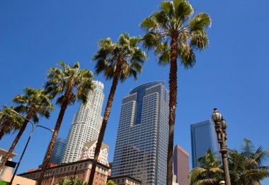 LA Downtown Los Angeles Pershing Square palm tress