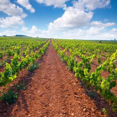 Mediterranean vineyards in Utiel Requena at Spain
