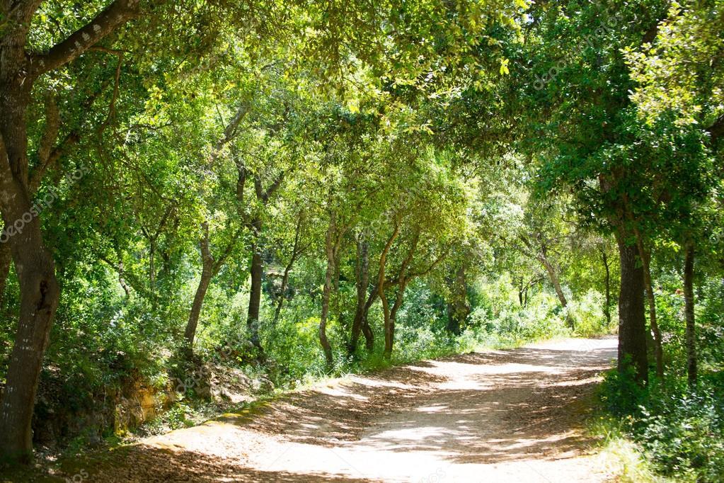 Menorca forest oak trees in Cala en Turqueta Ciudadela
