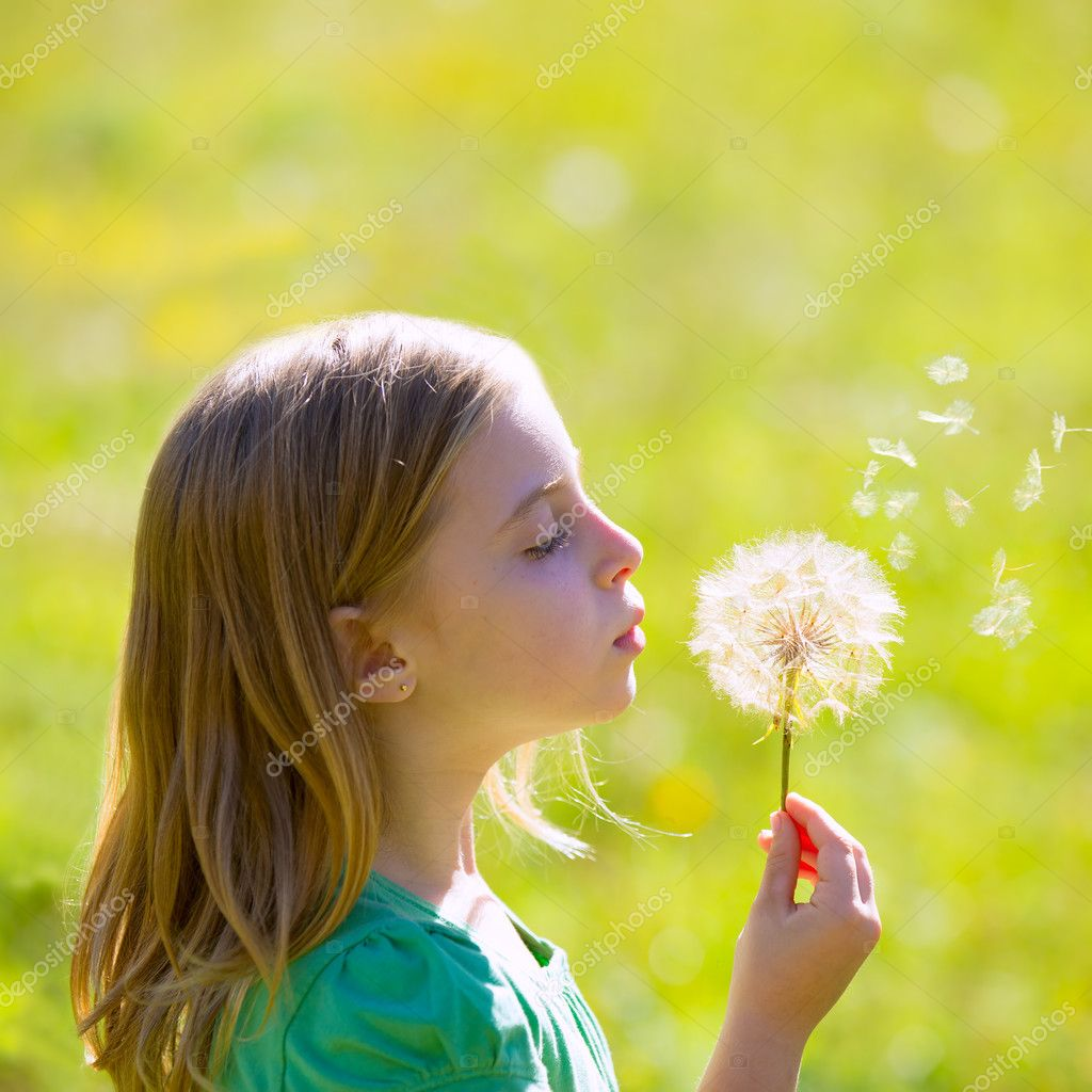 Blond kid girl blowing dandelion flower in green meadow