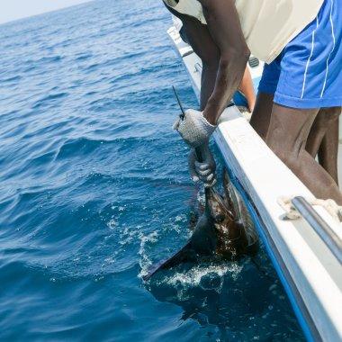 Sailfish catch billfish sportfishing holding bill