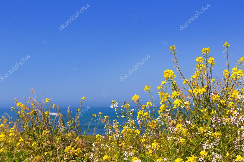 California pigeon point spring flowers in cabrillo hwy coastal h california pigeon point spring flowers in cabrillo hwy coastal h stock photo mightylinksfo