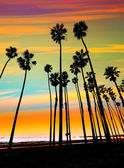Fotografie California sunset Palm Tree Zeilen in Santa barbara