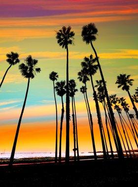 California sunset Palm tree rows in Santa Barbara
