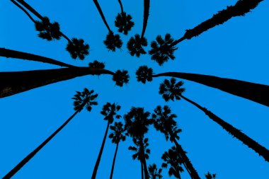 California Palm trees view from below in Santa Barbara US stock vector