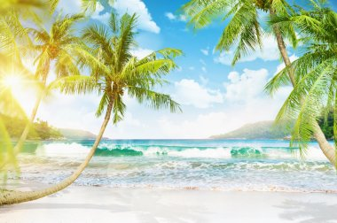 Tropical island with palm trees