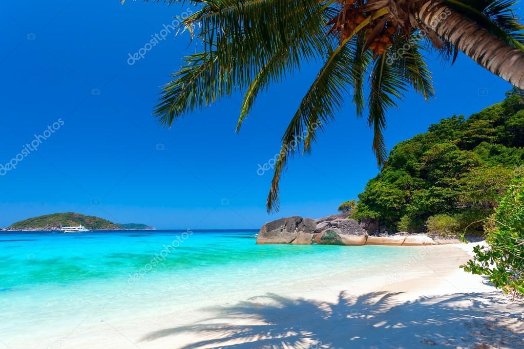 palm tree on a white beach