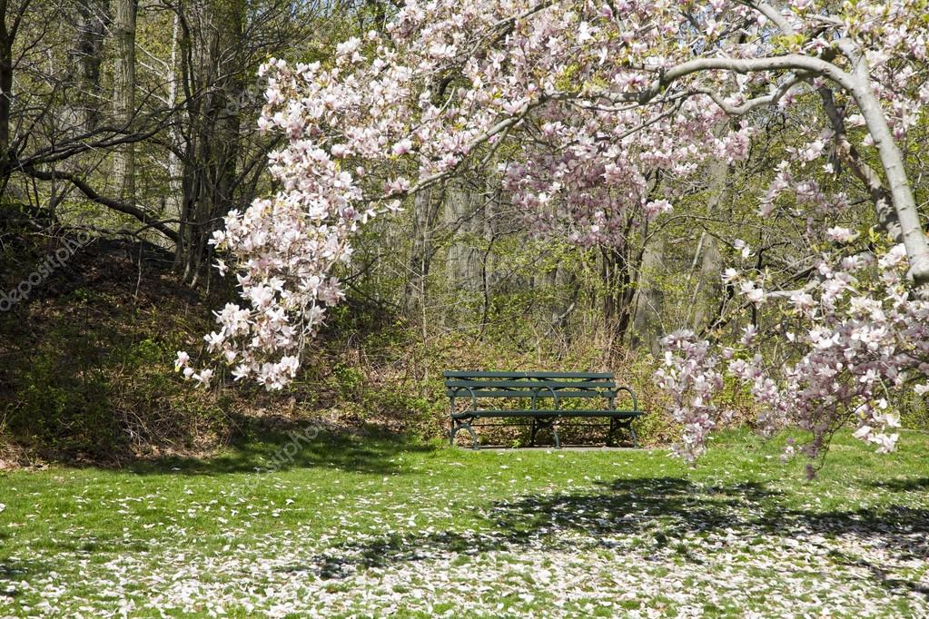 Green Park Bench and Magnolia Tree