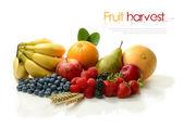 Fényképek A gyümölcs-betakarítás