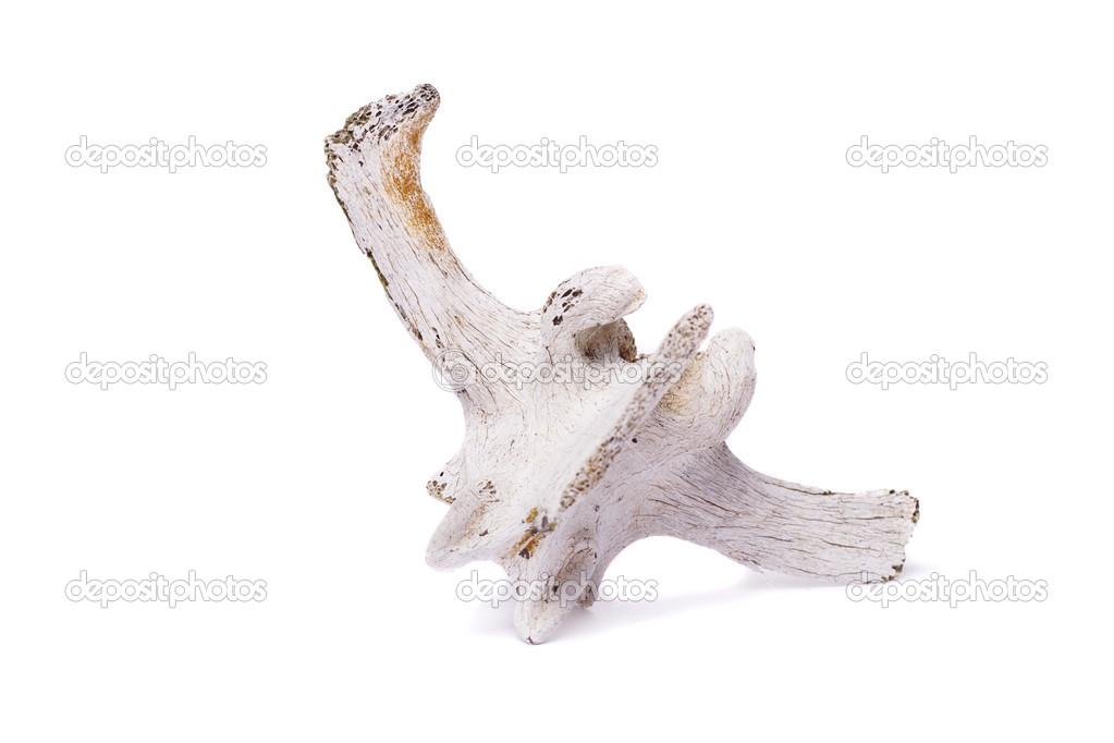 nuevo hueso de la columna vertebral de ovejas — Foto de stock ...